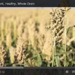 Sorghum: An Ancient, Healthy, Whole Grain (ヘルシーな全粒・古来穀物「ソルガムきび」)