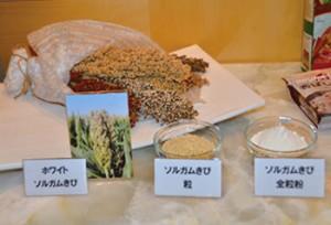 会場に展示されたソルガムきびの穂、ソルガムきびの全粒と全粒粉。
