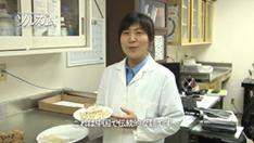 ソルガムきびを使った食品開発